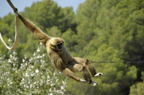 Article : Voici comment le singe a fini dans la sauce graine
